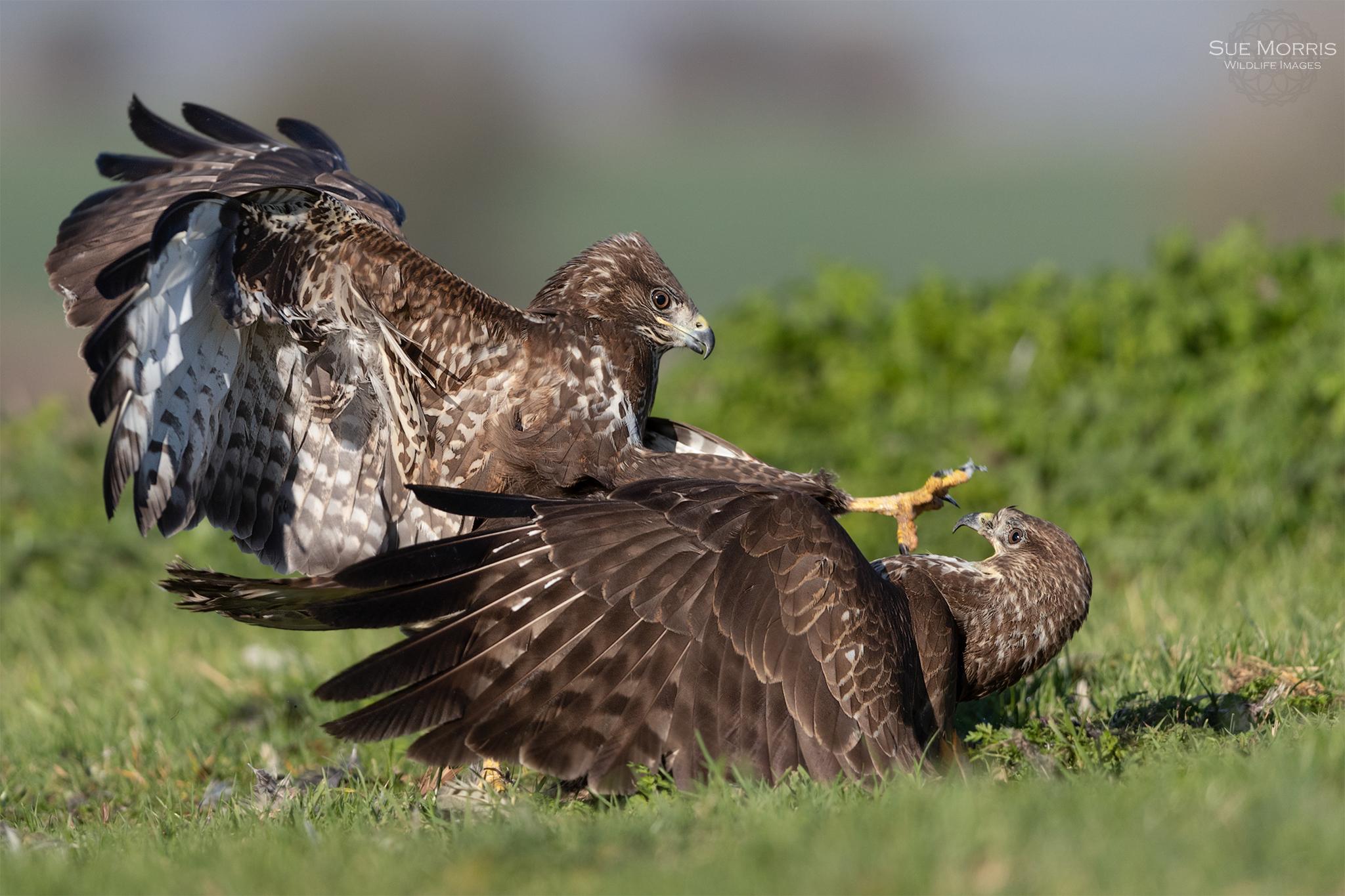 Bird Photographer of the year